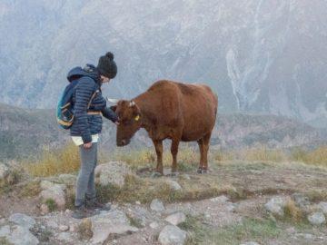 ja-i-krowa