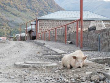 swinia-spi