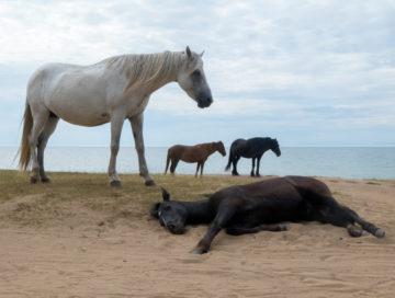 konie-bajkal
